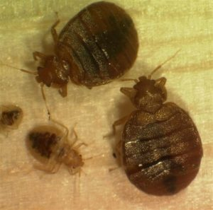 How to Get Rid of Bed Bugs Yourself - BreakingBedBugs com